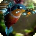Samsung Hummingbird